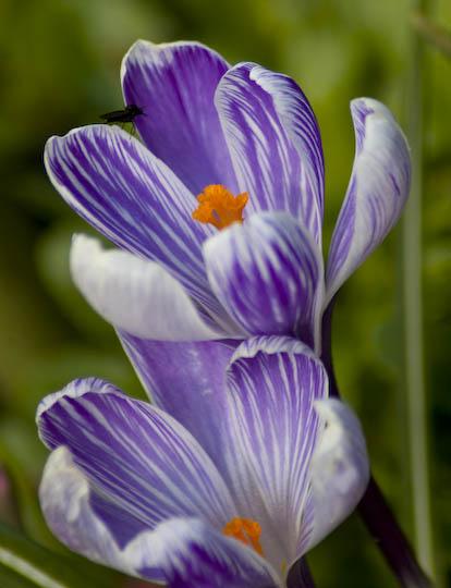 buchart_gardens_12-38