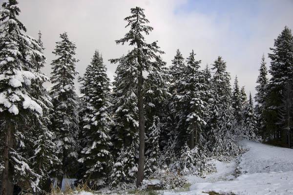 first_snow_11-14