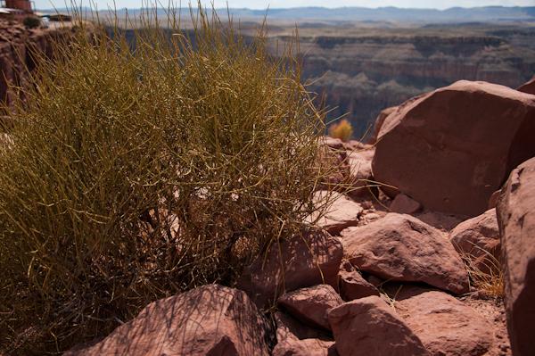 grand-canyon-35