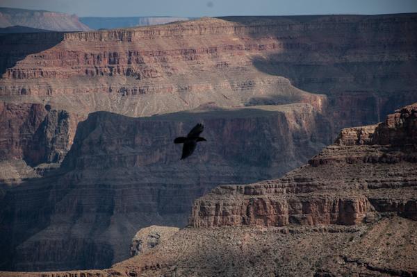 grand-canyon-37