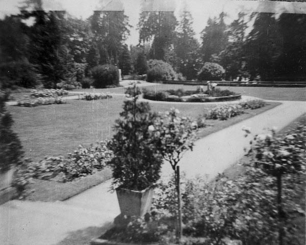 Roses at Stanley Park