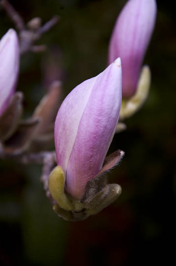 buchart_gardens_12-67
