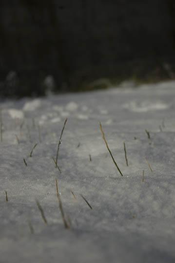 first_snow_11-13